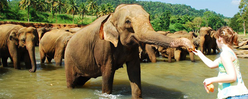 Jungle_Paradise_Kerala